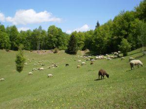 Radacini: dor de sat | Buzaul in reportaje